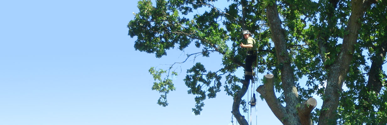 Acorn Tree Specialist Southampton, Hampshire fully qualified tree surgeons working for residential and commercial customers. Crown reduction, thinning, Tree Felling, Tree Surgery